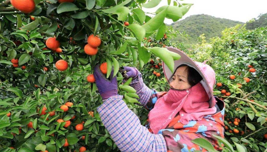 China issues key document on rural development